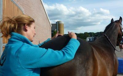 SI Gewricht problemen bij Paarden
